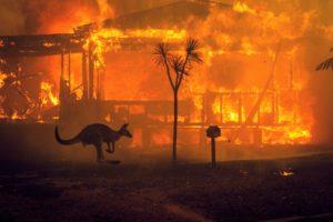 Incendio in Australia con canguro e casa in fiamme